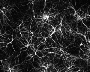 Fractal-neuron1