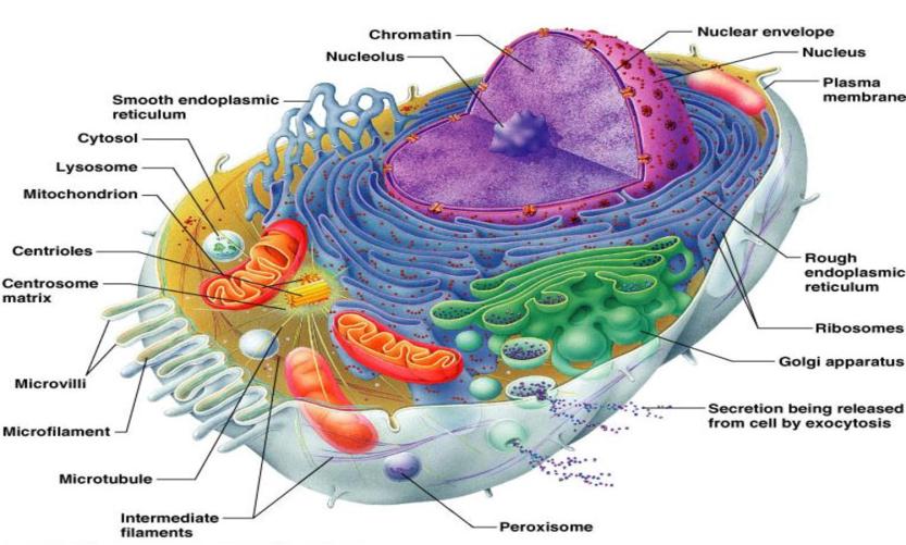 model-cell-2